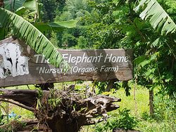 Friends of Asia-The Elephant Home Nursery, do something worthwhile on your travels!