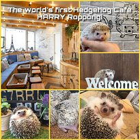 Hedgehog Cafe HARRY Roppongi &Hamster Cafe mogumogu