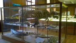 Le Dugong de Doué-la-Fontaine. Une belle pièce.