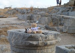 some of the ruins - and a genuine St. Johns Bear