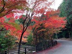 もみじ海道の紅葉も見頃でしたよ!