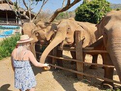 Elephant Delight. Outstanding.