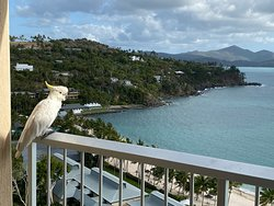 Typical view from the hotel balcony -- including the bird!