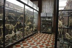 Интерьер Зоологического музея МГУ