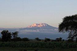Serengeti national park Tanzania & Mount Kilimanjaro the highest mountain in Africa.
