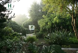 Jardin Intérieur à Ciel Ouvert