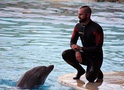 Addestratori e delfini in laguna