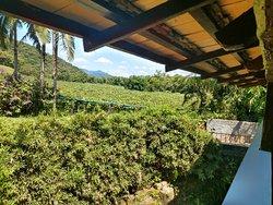 Plantação de uvas com seus parreirais