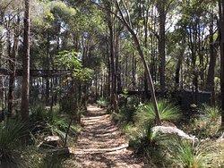 You walk through lovely bush land