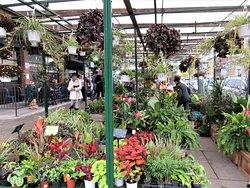 Le marché des fleurs au Marché By