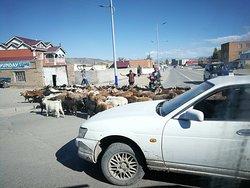 traffic 'jam' in Ulgii