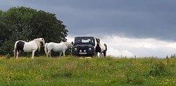 The 3 R's Horse Rescue Centre