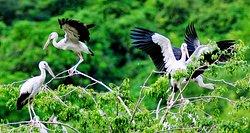 Thung Nham Bird Park
