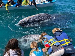 Some of the best Whale watching  ( and petting) in Baja, Mx. Feb. - April.
