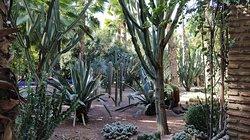 Plantes de Majorelle