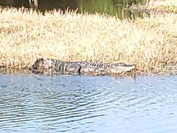 Kayaking the Everglades