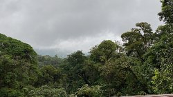 View from one of the hanging bridges