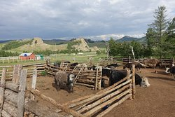 A local yak-herders farm with the beautiful steppe in the background.