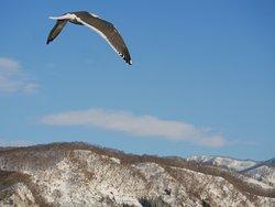 shiretoko nature cruise 04