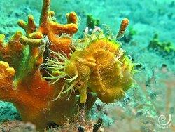 Hippocampus Diving Center