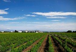 KTIMA AKRANI (Triantafyllopoulos Winery)