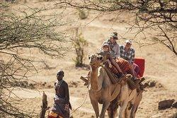 Camel Safaris