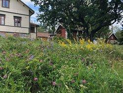 Summer and wild flowers Kesä ja niittykukat