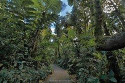 Reserva Bosque Nuboso Santa Elena