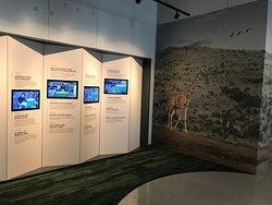 Zarraffa's History wall