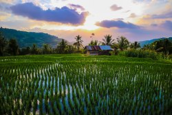 rice terrace view