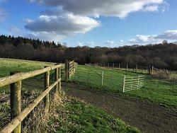 3.  Friezley Wood, Cranbrook, Kent