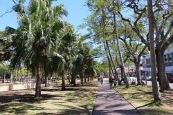 Place des Cocotiers , allée des cocotiers