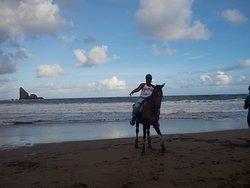 swim with the horses