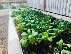 Come see our permaculture gardens. Seed to plate Dining
