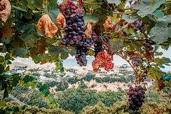 Wine tasting at Ristorante Gli Ulivi