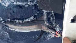 Black Marlin caught of Durban with Blue Water Charters Durban on a Marlin fishing charter