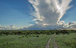 Moriti Safaris