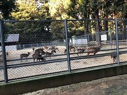 鹿嶋神宮の鹿は奈良まで行ったと言う