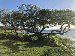 Views from the walk along the Wailea Beach Path