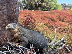 Galapagos Alternative