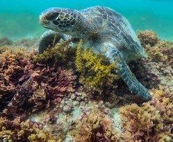 Green Turtle at Marine Room