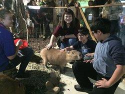 Petting the capybara