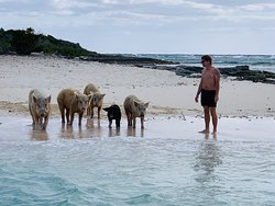 Half day to pigs island and many other very amazing things to see