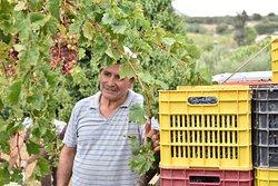 Winery Sinadinakis