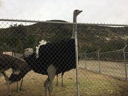 Even the ostrich at Quail Run wish they could get a table at The Rock!