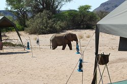 Elephant walking pass our camp in Damaraland.