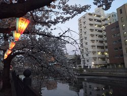 横浜の桜の名所