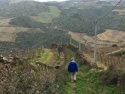 Overlooking the Douro Valley