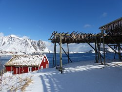In the western part of Lofoten, at the mouth of Reinefjord, lies the fishing village of Reine, where the majestic Lofoten peaks and the Arctic Ocean are our next-door neighbours. In the summer you will enjoy the long days and the Midnight Sun and in the winter the short days with spectacular weather and the Northern Lights.