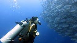 Island Adventure Dive Center